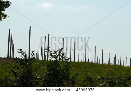 view of hops growing farm in upstate New York