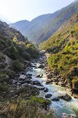 Forest scenery with river among the mountains of Langtang valley one of the popular trekking route in Nepal poster
