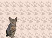 A sweet cat against a cat tracks background poster