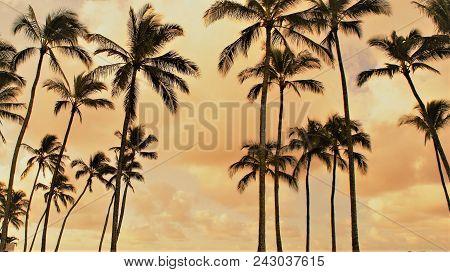 Palm Trees Silhoutte On An Orange Sky Background.