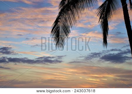 Kauai Sunset Background With A Silhoutte Of Palm Tree Leaves.