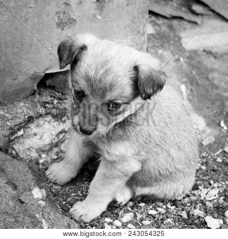 Little Sad Puppy Is Sitting On Ground. Cute Mongrel Pet. Square Black And White Photo.