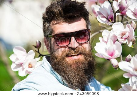 Man With Beard And Mustache Wears Sunglasses On Sunny Day, Magnolia Flowers On Background. Fashion C