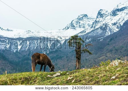 Horse And Lonely Tree On The Background Of Mountains, Nepal.
