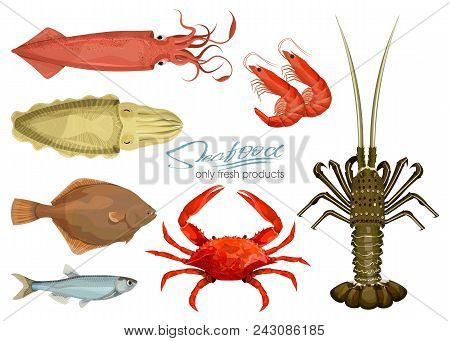 Seafood In Cartoon Style. Vector Illustrations. Set Squid, Cuttlefish, Crab, Shrimp, Spiny Lobster,