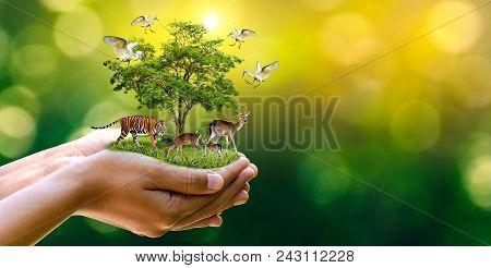 Earth Day Concept Nature Reserve Conserve Wildlife Reserve Tiger Deer Global Warming Loaf Ecology Hu