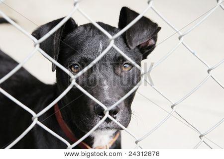 Black pup in a pen