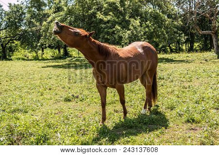 Horses On The Green Meadow Eating Grass