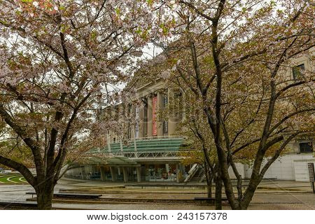 Brooklyn, Ny - May 30, 2018: Cherry Trees In Full Bloom In Front Of The Brooklyn Museum In Brooklyn,