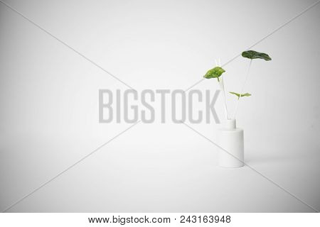 Potted Fragrance Plant On White Background. Zen Serenity Peaceful Background.