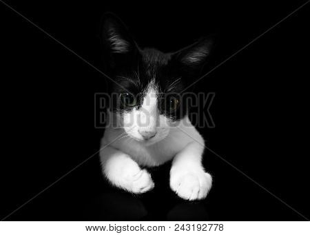Black Cat On Black Background, Cropped Shot.cute Tuxedo Cat With Funny Face.tuxedo Cat Over Yellow B