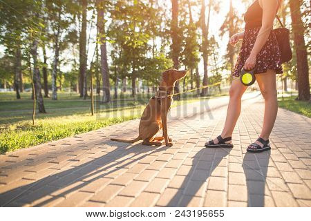 Girl And Dog Play On The Alley In The Park On The Background Of The Sun. Dog Jumps At The Girl While