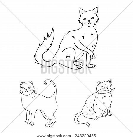 Breeds Of Cats Outline Icons In Set Collection For Design. Pet Cat Vector Symbol Stock  Illustration
