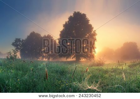 Bright Dawn In Early Morning On Countryside. Meadow With Grass And Trees On Sunrise In Summer. Lands