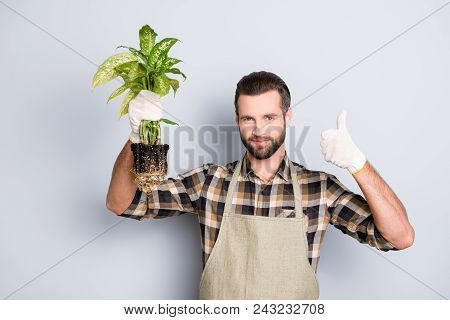 Portrait Of Attractive Florist With Stubble Showing Demonstrate House Diffenbachia With Soil And Thu