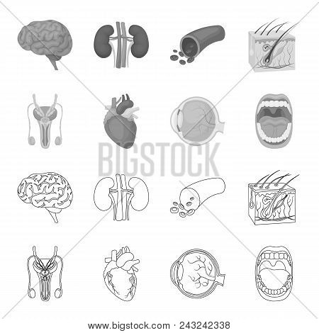 Male System, Heart, Eyeball, Oral Cavity. Organs Set Collection Icons In Outline, Monochrome Style V