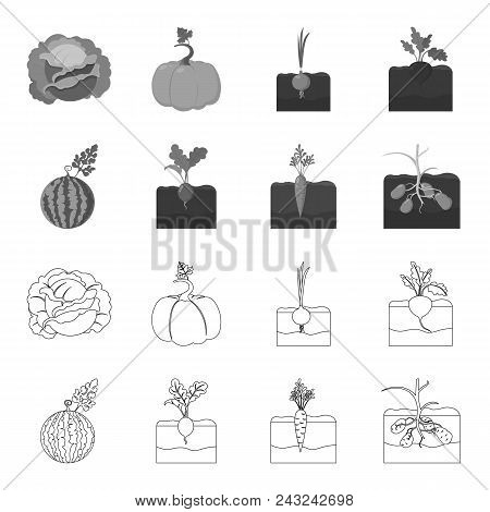 Watermelon, Radish, Carrots, Potatoes. Plant Set Collection Icons In Outline, Monochrome Style Vecto