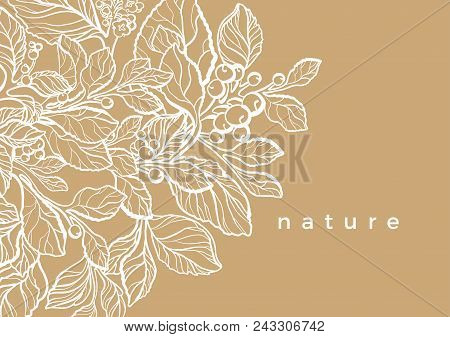 Vector Floral Template Of Mate Branch With Leaf, Flower, Berry Botanical Art Line Drawing Design Rea