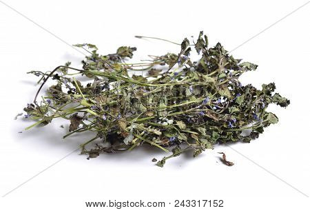 Dried Medicinal Herbs Raw Materials Isolated On White. Glechoma Hederacea. It Is Commonly Known As G