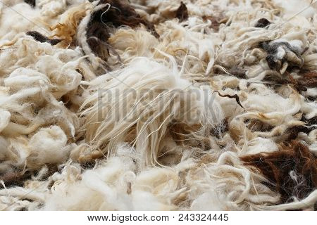 Sheep Wools.cleaned Sheep Wools Will Be Pillows And Comforters,