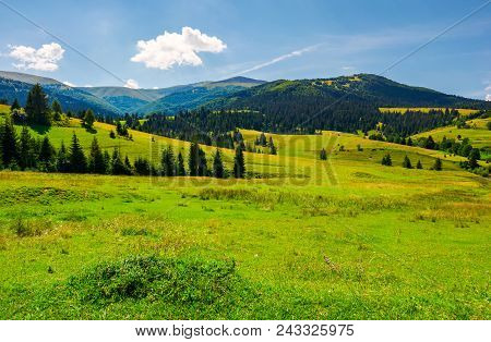 Grassy Meadows Of Borzhava Valley. Forested Hill With Velykyi Verkh Peak In The Distance. Lovely Sum