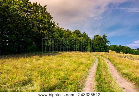Road Through Grassy Meadow In To The Beech Forest. Lovely Summer Scenery Of Carpathian Mountainous A