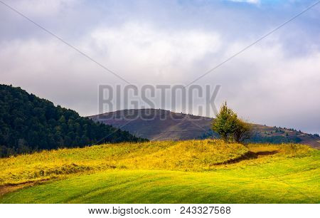 Tree By The Road On A Grassy Hump. Lovely Autumn Landscape With Mountain Top In The Distance