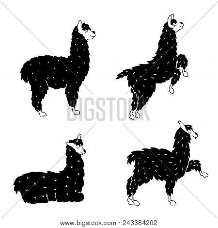 Vector Set Of Characters. Illustration Of South America Cute Llama. Isolated Outline Cartoon Baby Ll