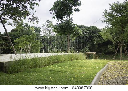 Beautiful Home Garden With Trees And Green Grass, Stock Photo