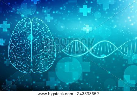 Human Brain 2d Illustration, Digital Illustration Of Human Brain Structure, Creative Brain Concept B