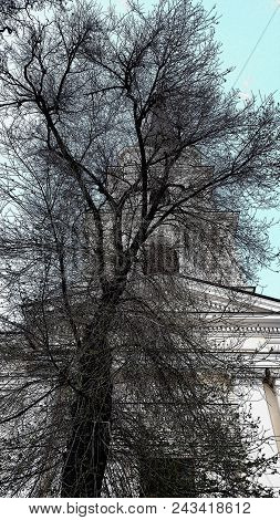 Black Tree Silhouettes In Front Of Classic Architecture Historic Building. Black Silhouettes Of Tree