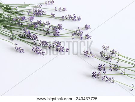 Styled Stock Photo. Decorative Still Life Floral Composition. Fresh Flowers Of Lavender Isolated On
