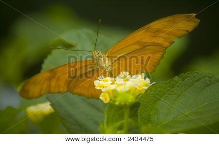 Orange Tropical Butterfly On A Flower