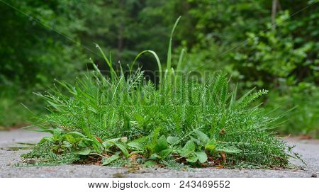 Grass Grows In Asphalt Road, Southern Bohemia, Czech Republic
