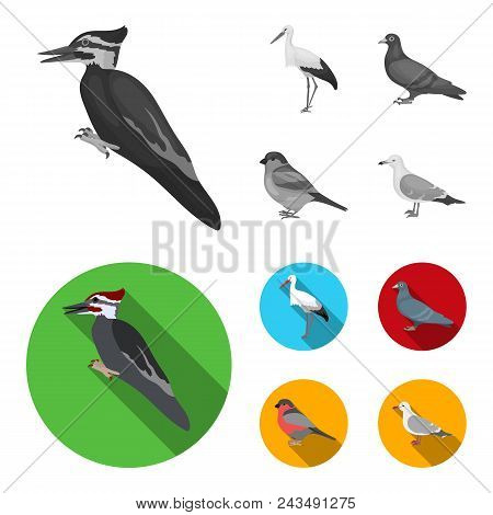 Woodpecker, Stork And Others. Birds Set Collection Icons In Monochrome, Flat Style Vector Symbol Sto