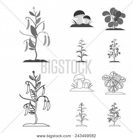 Mushrooms, Strawberries, Corn, Cucumber.plant Set Collection Icons In Outline, Monochrome Style Vect