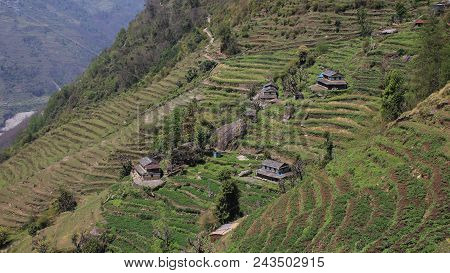 Rural Scene In Taulung, Annapurna Conservation Area, Nepal. Steep Hill With Terraced Fields And Trad
