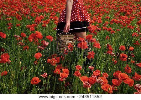 Woman Face Beauty. Opium Poppy, Agile Business, Ecology. Poppy, New Technology, Remembrance Day. Edu