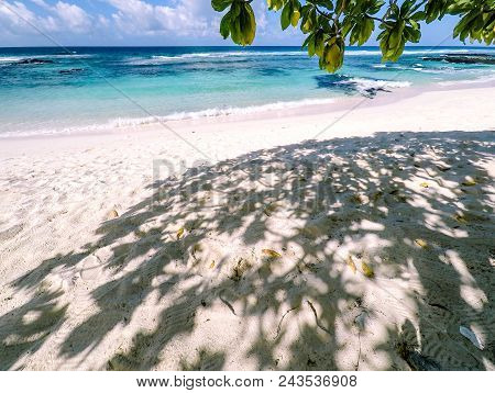 Under A Tropical Tree Casting Dappled Shade On An Idyllic White Sand Beach On A Sunny Day. Overlooki