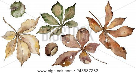 Autumn Chestnut Leaves. Leaf Plant Botanical Garden Floral Foliage. Aquarelle Leaf For Background, T