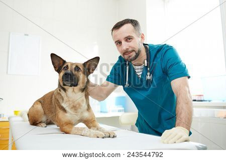 Young veterinarian and one of his patients having appointment in vet clinics