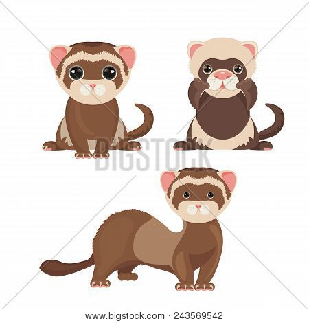 Ferret Polecats In Cartoon Style, Funny Emoji Faces. Cute Friendly Animals Vector Illustration Isola
