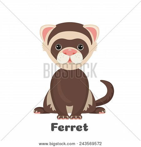 Ferret Animal With Wide Open Eyes Vector Illustration Isolated On White. Polecat Toy For Children Wi