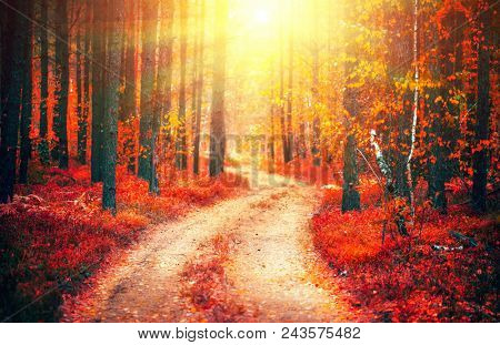 Autumn, Fall scene. Beautiful Autumnal park with pathway. Beauty nature scene. Autumn landscape, Trees and Leaves, forest with bright red leaves on trees and bright sun