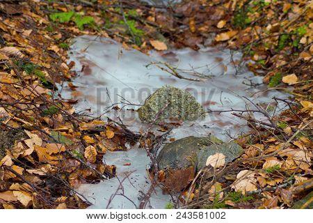 Winter Scene- Bigger Stone In Frozen Water In The Woods.stone, Frozen Water And Old Leaves In The Wo
