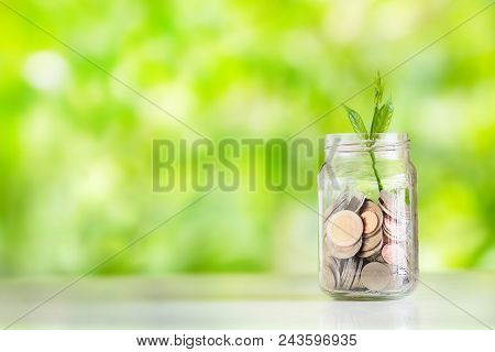 Save Money Interest Plant Growing In Savings Coins Money In The Glass Saving Money With Hand Putting