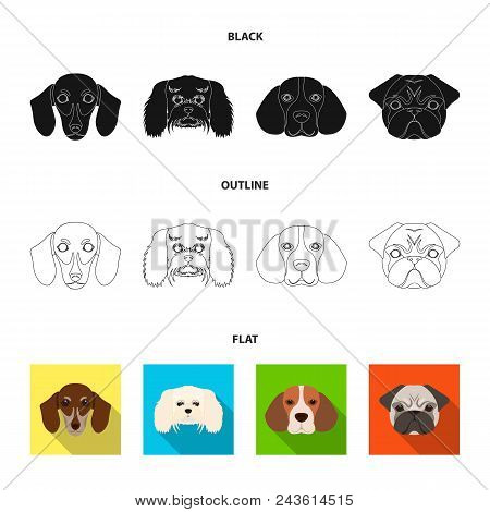Muzzle Of Different Breeds Of Dogs.dog Breed Of Dachshund, Lapdog, Beagle, Pug Set Collection Icons