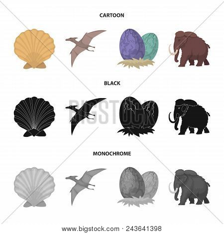 Prehistoric Shell, Dinosaur Eggs, Pterodactyl, Mammoth. Dinosaur And Prehistoric Period Set Collecti