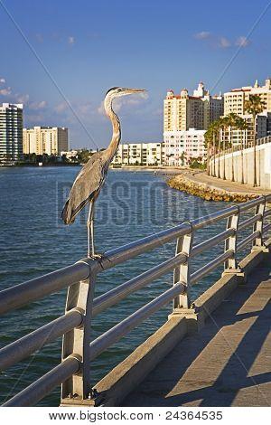 Giant Heron, Urban Pier
