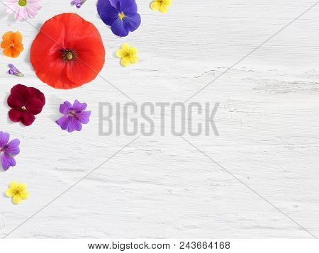 Styled Stock Photo. Feminine Desktop Floral Composition With Wild And Edible Garden Flower. Poppy, P